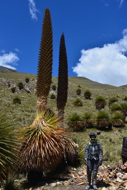 Naomi posando al pie de un par de ejemplares de la planta llamada Puya de Raimondi. Se pueden apreciar las dimensiones peculiares de estas plantas típicas de la zona. Solo los afortunados tienen la suerte de verlas en floración: su ciclo es cada 50-75 años.