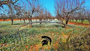 Precioso tramo de pistas y campos en flor