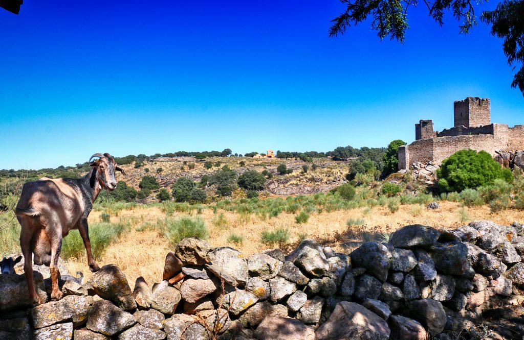 Castillo de Mayoralgo (también llamado de Garabato), Aldea del Cano.