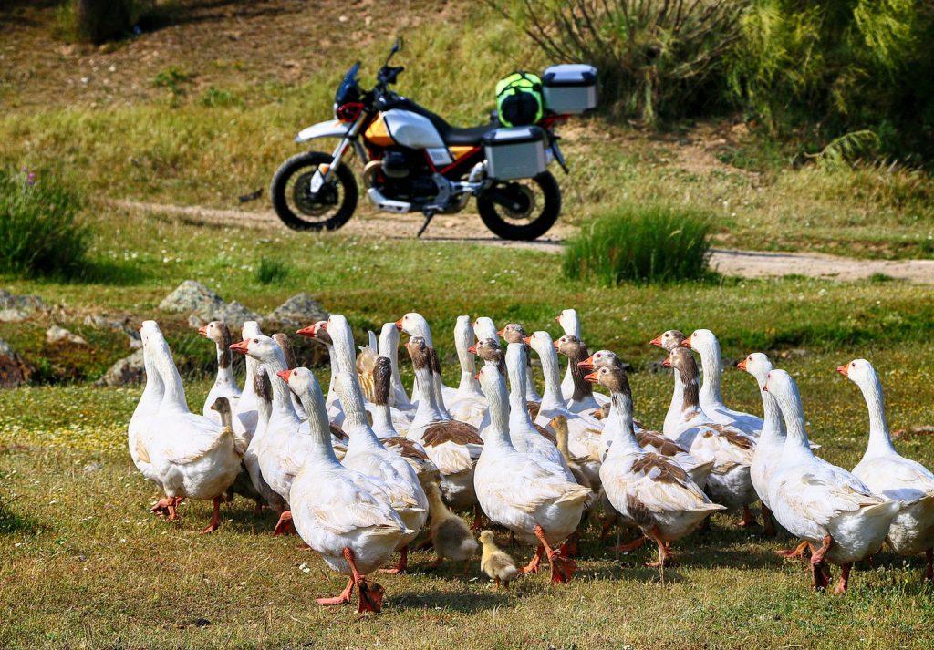 La moto causa inusitada expectación en Herreruela.